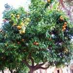 Сад Савелло